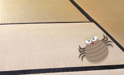 畳やカーペットのお部屋、押入れなどは塵性(じんせい)ダニが潜みやすい場所です。